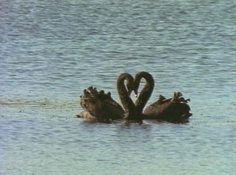 Love in the Wild - Grainger TV